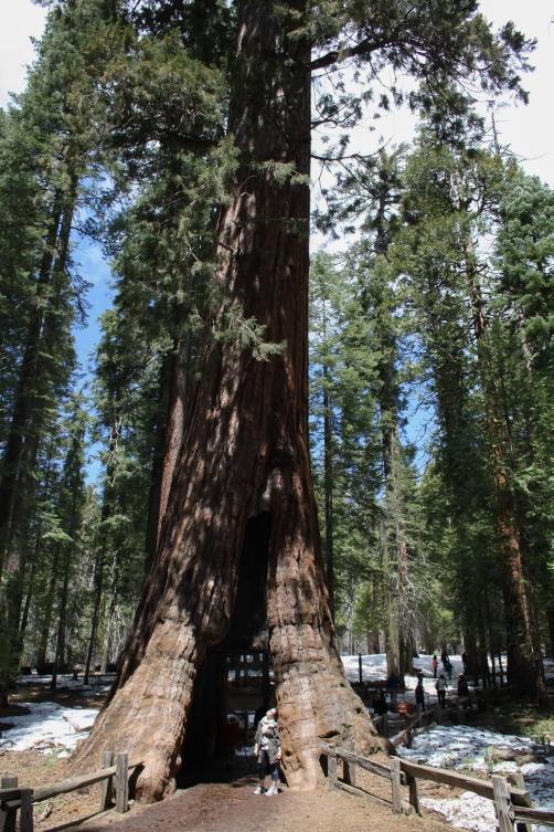 KB_Blog_Yosemite (13 of 16)