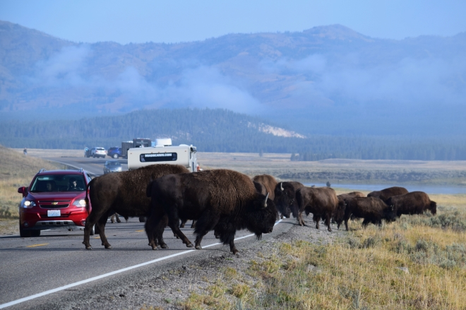 DSC_0437_40421-Edit_Yellowstone